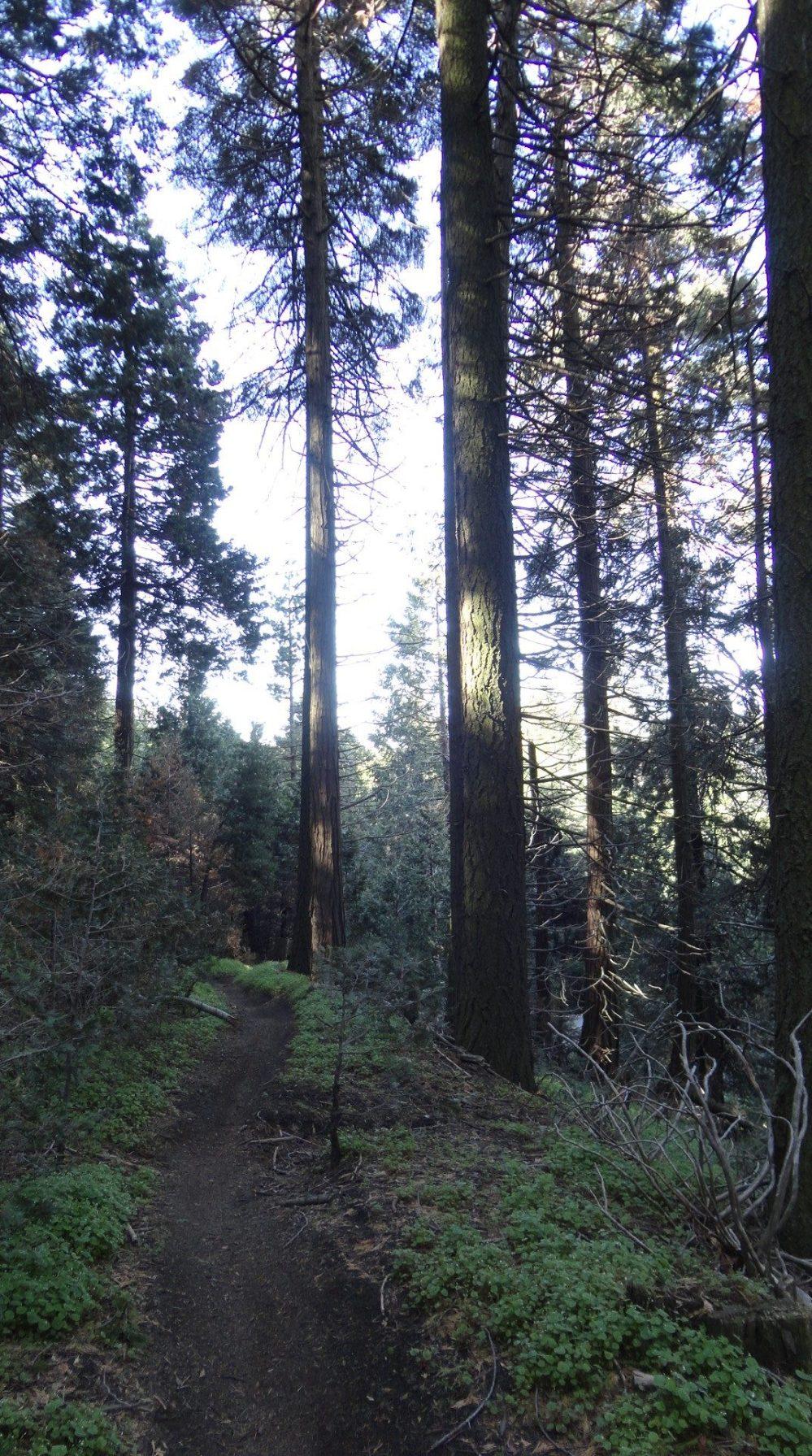 Morning Glory, JO Trail