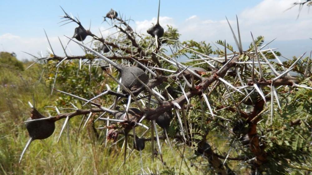 Mt Longonot National Park, Kenya