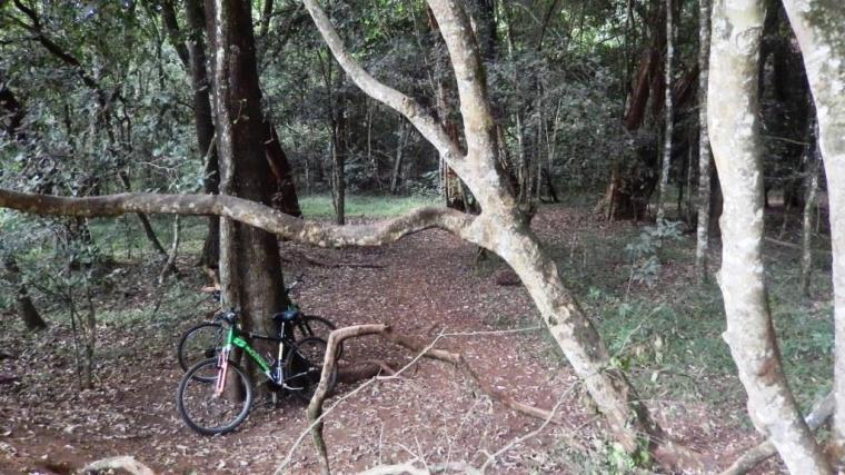 Karura Forest, Nairobi, Kenya