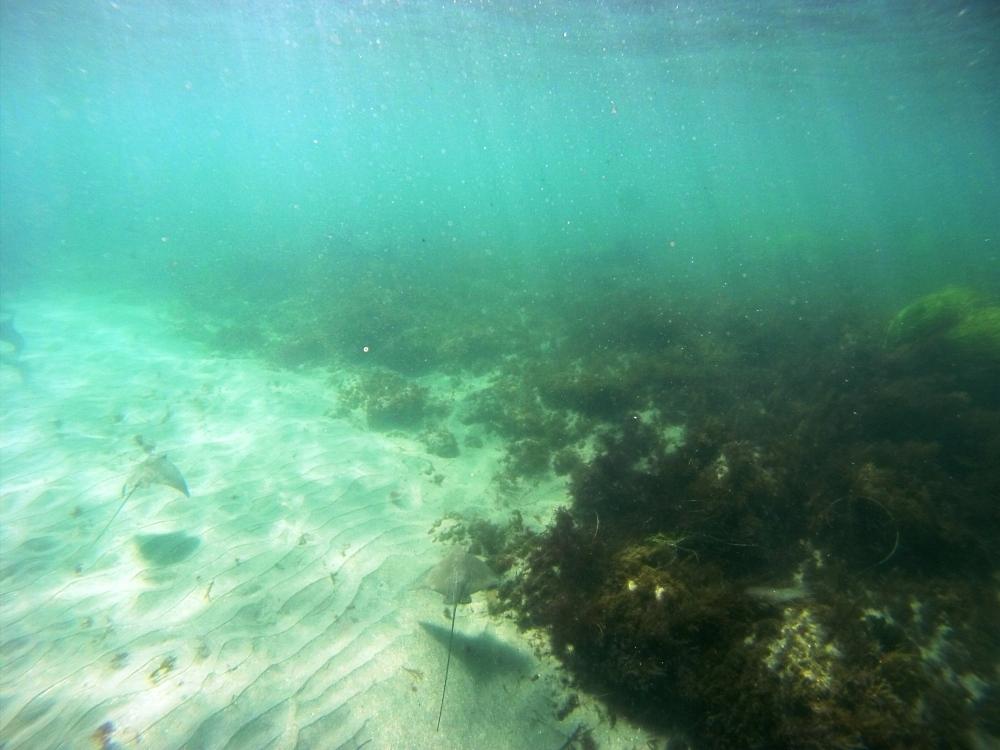 La Jolla Underwater Park